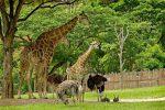 Открытый зоопарк – Зоопарк Кхао Кхео в Тайланде, Паттайя